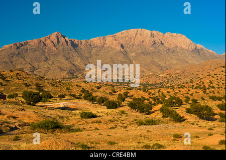Typical mountain landscape with Argan Trees (Argania spinosa) in the evening light, Anti-Atlas Mountains, southern - Stock Photo