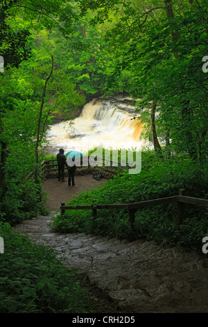 Aysgarth Falls, Wensleydale, Yorkshire. Tourists watch the Middle Falls on the River Ure on a wet day in June. - Stock Photo