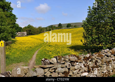 Path through a field of buttercups near Askrigg, Wensleydale, Yorkshire, England - Stock Photo