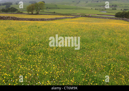 Flower Meadows, Appersett pastures; Appersett village, Wensleydale; Yorkshire Dales National Park, England, United - Stock Photo