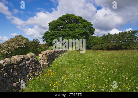 traditional flower meadow at Bellerby, Wensleydale. Yorkshire Dales. This meadow is on land owned by the Ministry - Stock Photo