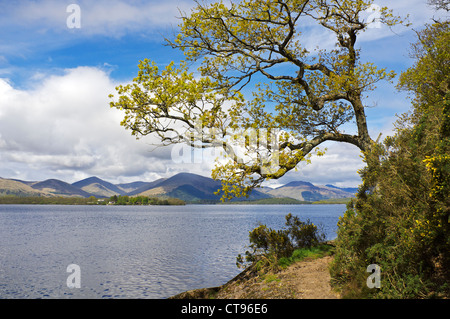 View from Balmaha on the east shore of Loch Lomond, Scotland, UK - Stock Photo