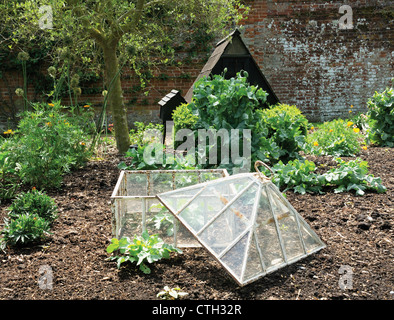 Papaver, Poppy and other plants in a garden with an open glass frame cloche in the foreground. - Stock Photo