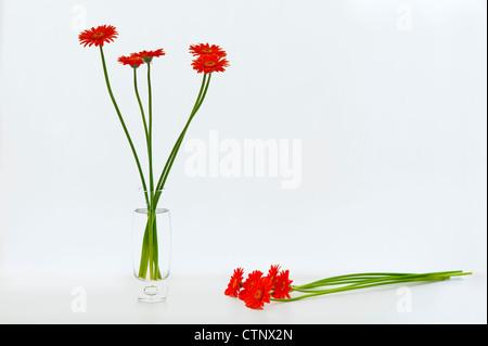 Flower arranging Gerberas in a vase - Stock Photo