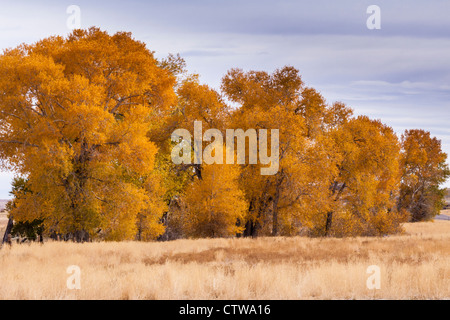 Autumn color along scenic highway US 287 in central Wyoming. - Stock Photo