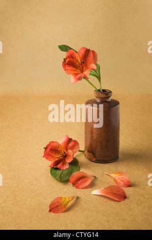 red flower in antic pharmaceutical bottle - Stock Photo