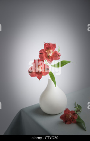 two Alstroemerias in white Vase - Stock Photo