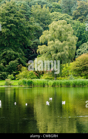 Trees reflected in a large garden pond - Stock Photo