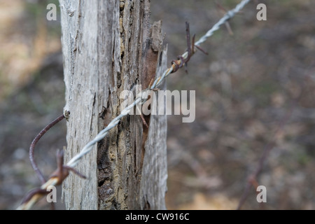 Barbed wire fence on a rotten wooden fencing post. - Stock Photo