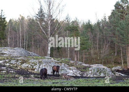 rural scene in norway with two horses, rocks and forest - Stock Photo