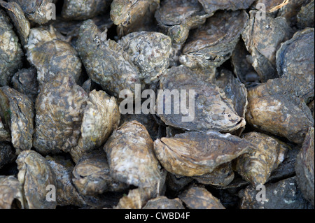 Oysters in Bayford VA - Stock Photo