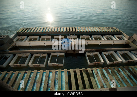 Dock and beds for raising oysters on a farm in Bayford VA - Stock Photo