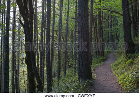A  hiking trail winds through a dense forest with tall trees lined on both sides - Stock Photo