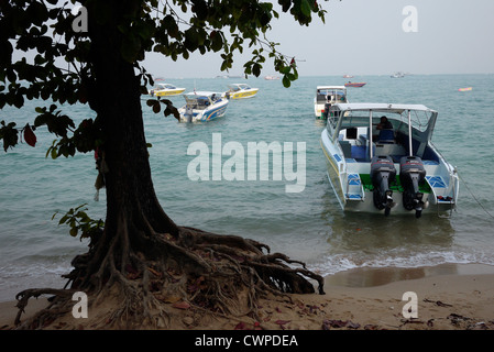 Sea erosion exposes tree roots on the beach in Pattaya Thailand - Stock Photo
