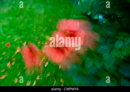 Day lily abstract - Stock Photo