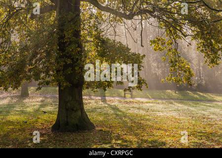 Autumn leaves in Waterlow Park, Highgate, London - Stock Photo
