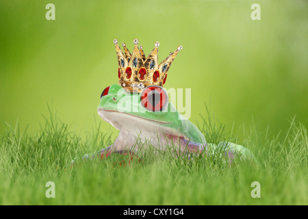 Frog wearing a crown in the grass - Stock Photo