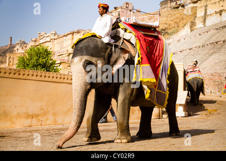 Elephant for carrying tourists up to Amber Fort, near Jaipur, Rajasthan, India, Asia - Stock Photo