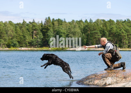 The Labrador retriever is commanded to fetch - Stock Photo