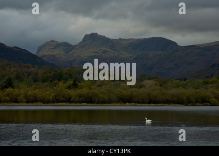 Swan on Elterwater, near Ambleside, with Langdale Pikes in the distance, Lake District National Park, Cumbria, England - Stock Photo
