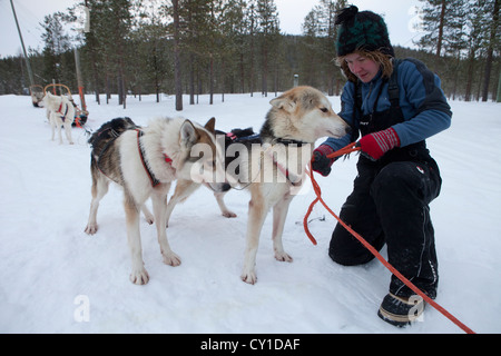 Husky dogs in Finland - Stock Photo