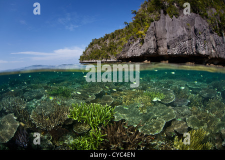 Brightly colored reef fish swim above a healthy coral reef that grows next to a limestone island off Papua. - Stock Photo