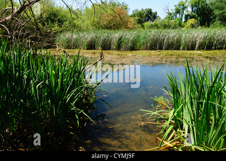 Lodi, inland from San Francisco, a small town in a wine growing area. Wilderness and nature, Lodi Lakes park. - Stock Photo