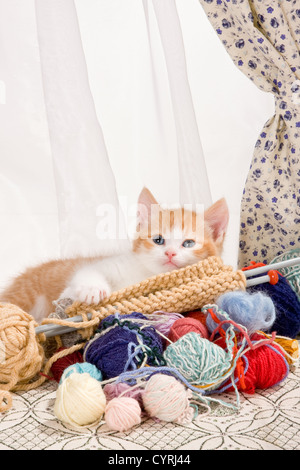 Six weeks old kitten being naughty with knitting wool - Stock Photo