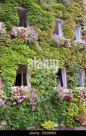 Green overgrown house in Kiedrich, Rheingau, Hesse, Germany - Stock Photo