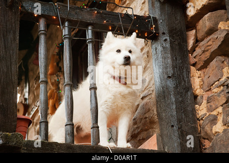 Dog in a cottage Barcena Mayor Saja Nansa Cantabria Spain - Stock Photo