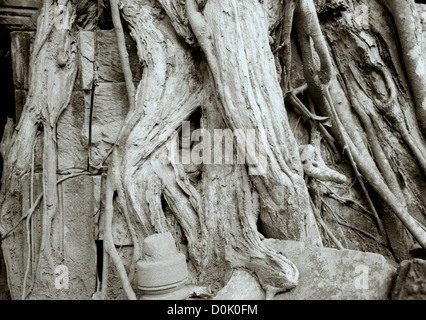 Travel Photography - Giant Banyan Strangler Fig tree at the Temple of Ta Prohm at Temples of Angkor in Cambodia - Stock Photo