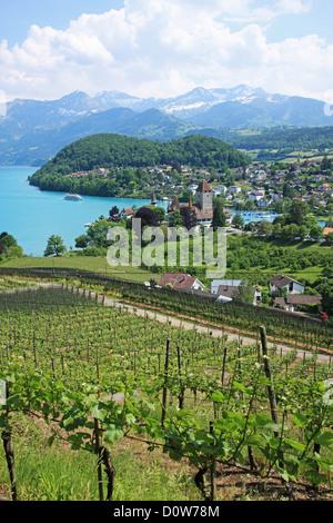 Switzerland, Canton Bern, Spiez at Lake Thun - Stock Photo
