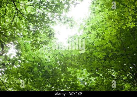 Sun shining through canopy of trees - Stock Photo