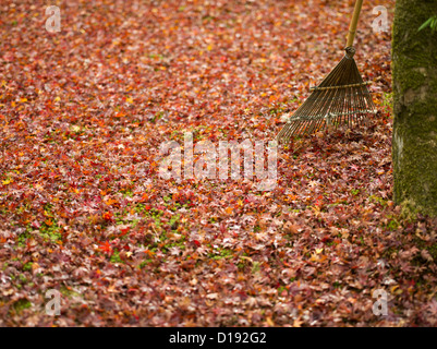 Fall / autumn in Kyoto, Japan. Red / golden brown leaves on the ground in Kinkakuji temple. - Stock Photo