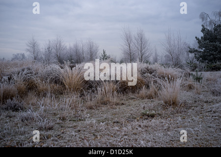 Hoar Frost on Grass at Poors Allotments, Camberley, Surrey -4 - Stock Photo