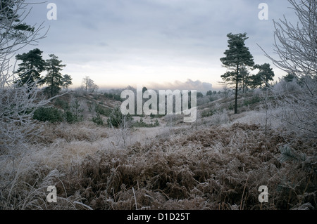 Hoar Frost on Vegitaion at Poors Allotments, Camberley, Surrey -1 - Stock Photo