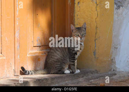 Cat sitting on a threshold in front of an old door, Greece, Dodecanese Island, Non-pedigree Shorthair, felis silvestris - Stock Photo
