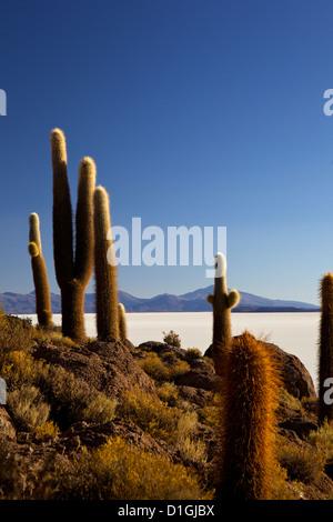Cacti on Isla de los Pescadores and the salt flats of Salar de Uyuni, Southwest Highlands, Bolivia, South America - Stock Photo