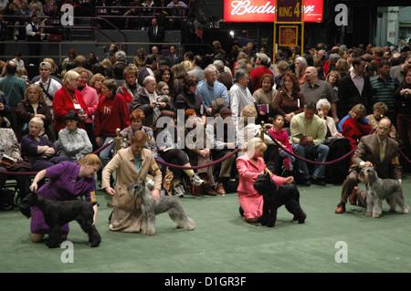 New York City, Westminster Kennel Dog Show, Madison Square Garden, Midtown Manhattan - Stock Photo