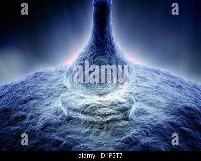 Synapse, artwork - Stock Photo