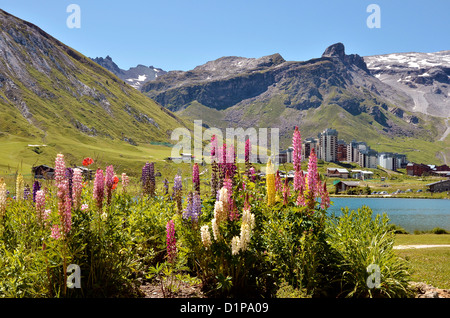 Tignes le Lac with lupine flowers and Tignes-Val Claret in the background. Tignes is a commune in the Tarentaise - Stock Photo