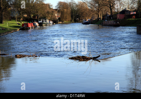 River Cam in spate at Jesus Green, Cambridge, England, UK. High discharge and water levels pouring over weir adjacent - Stock Photo