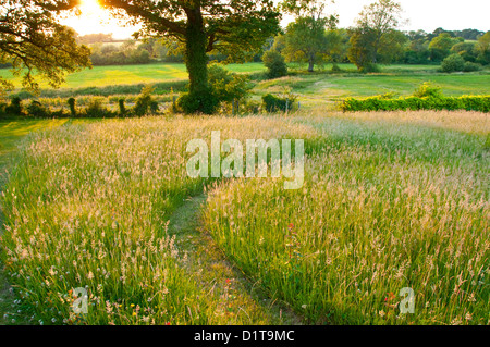 Meadow and field on a late summer evening in Sussex England - Stock Photo