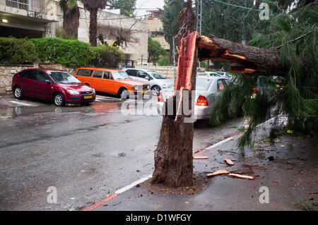 A tree broken by extreme winds lands on a pedestrian sidewalk as a strong winter storm hits Jerusalem. In this incident - Stock Photo