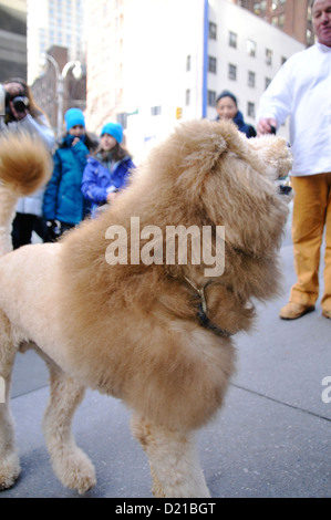Charles the Lion Dog. EDITORIAL USE ONLY. NO COMMERCIAL USES. - Stock Photo
