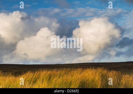 Evening light on the grassland of Askrigg Common in Wensleydale, Yorkshire Dales National Park, England - Stock Photo