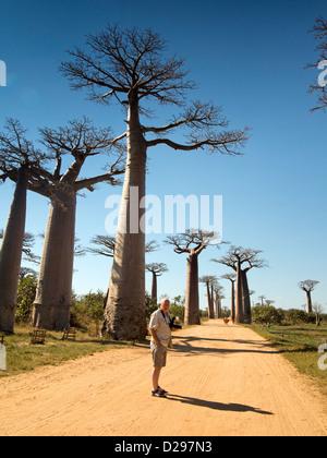 Madagascar, Morondava, Avenue of baobab, Alee des Baobabs, tourist amongst trees - Stock Photo
