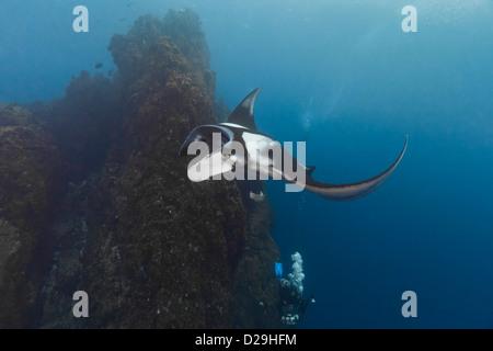 Giant oceanc manta ray swimming above a diver in Archipielago de Revillagigedo, Mexico, Rocio del Mar, Socorro Islands. - Stock Photo