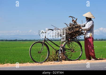 People Vietnam - Man collecting sticks / wood near rice fields near Hue, Vietnam - Stock Photo