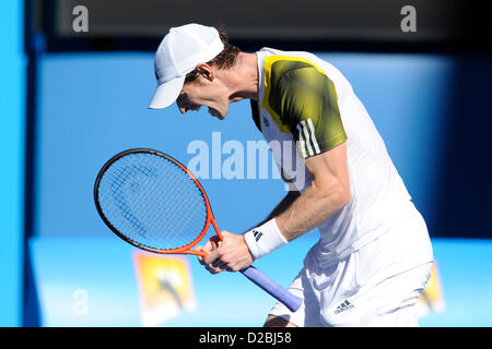 19th January 2013. Melbourne, Australia. Andy Murray of Great Britain reacts after winning his match on day six - Stock Photo